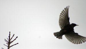 wing motif